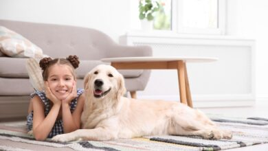 Prepare Your Home For a New Puppy